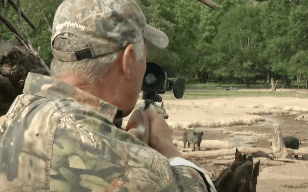 Big Bore 50 caliber air rifle hunt for hogs just north of Houston, Texas.