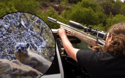 Hyrax & Goose Hunt with PCP Airguns
