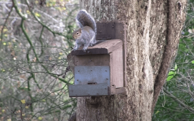 Epic Squirrel Hunting with an Airgun