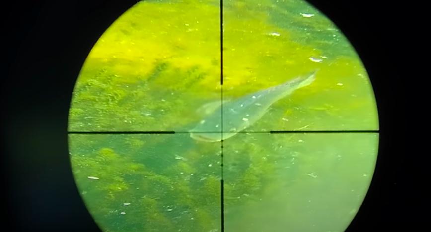 Airgun Fish Hunting
