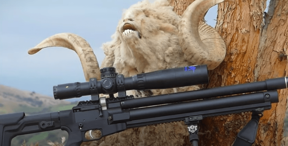 Big Game Airgun Hunting /Part 1