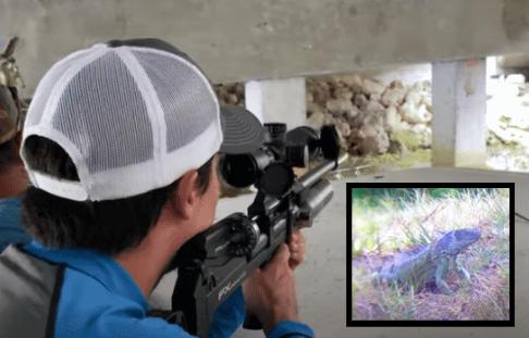 FX Airguns Impact M3: GODZILLA (Iguana) Hunt – Clean – Cook!