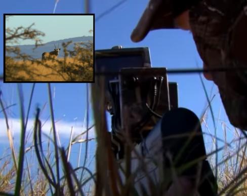Benjamin Bulldog Big Bore Air Rifle Hunting in South Africa: Oryx